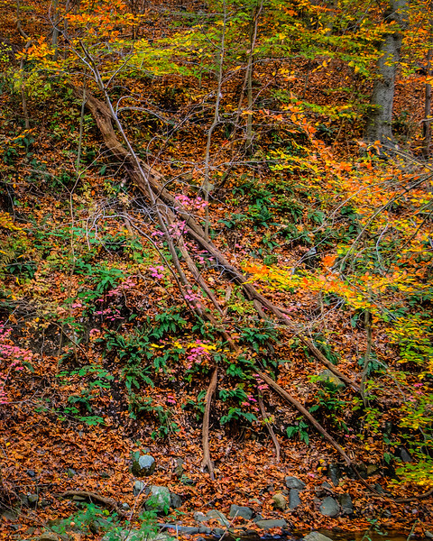 Hill Side in Fall Along Bonnie Branch #2