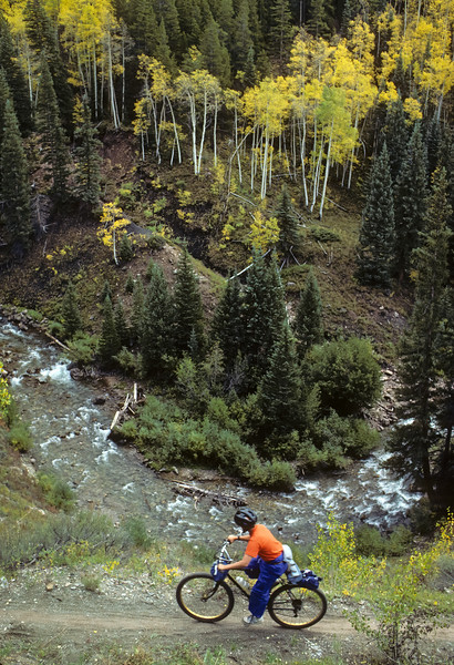 Mountain Biker and Aspens