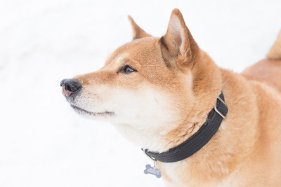 Terje in the Snow