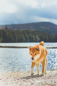 Lake-side Terje