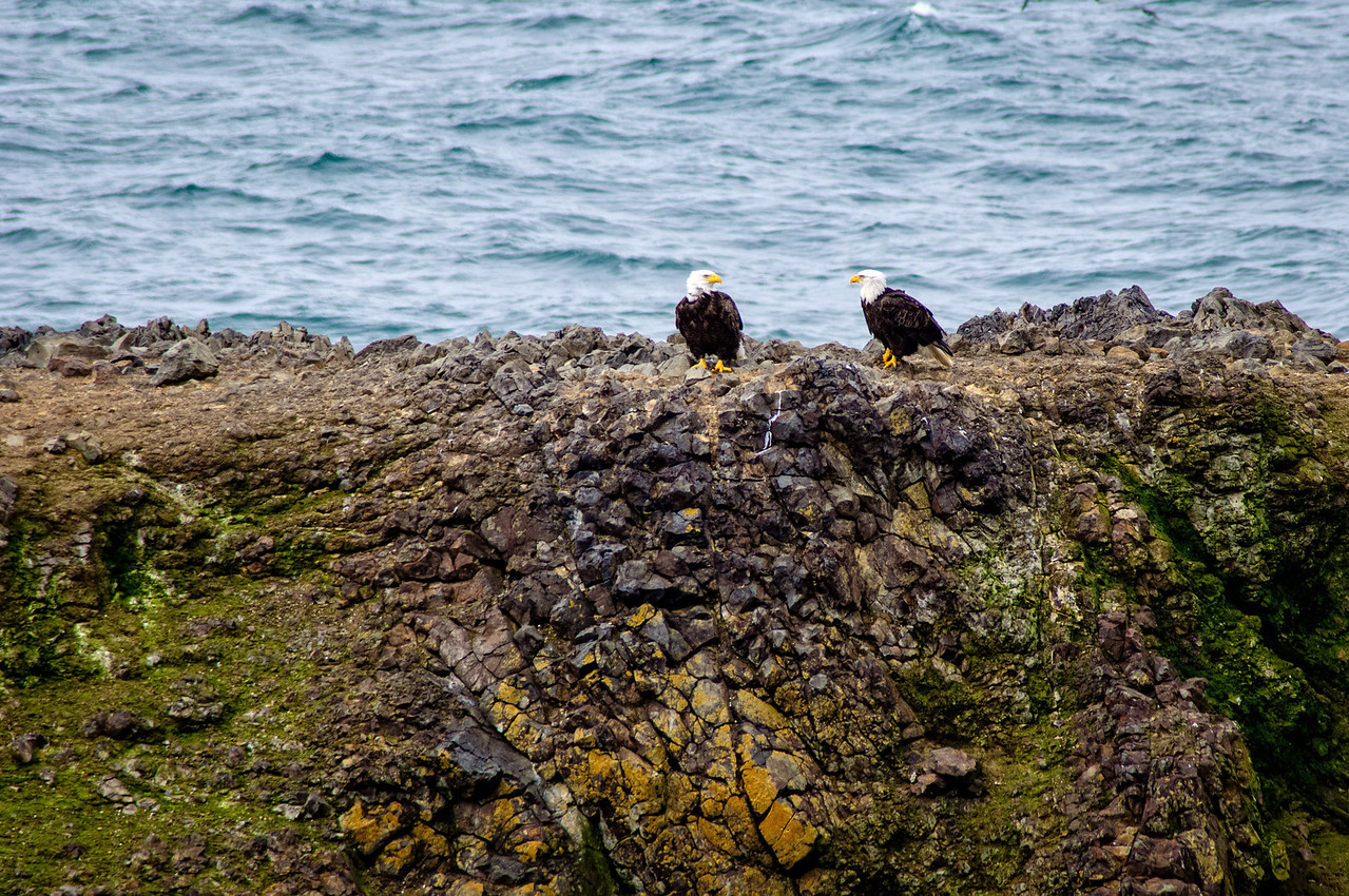 Yaquina Head Eagles