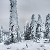 Hoar Frost Alaska Winter 21012