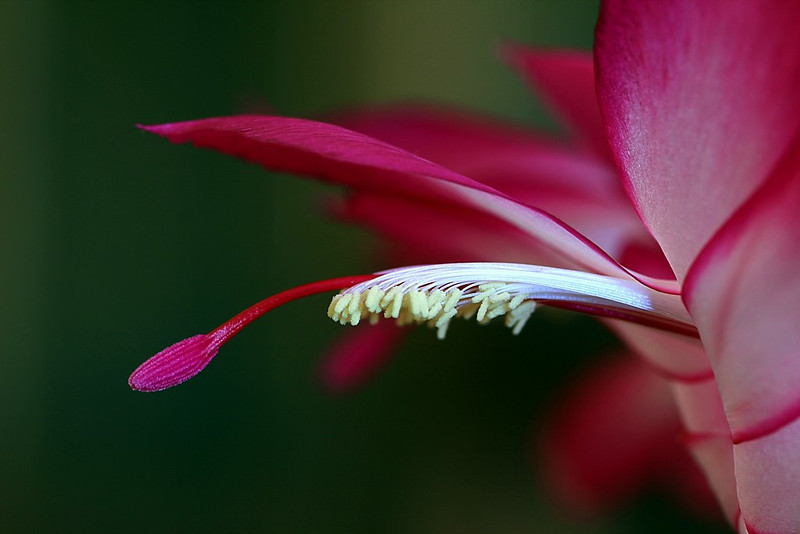"""""""Cactus Macro"""" (#0524)"""
