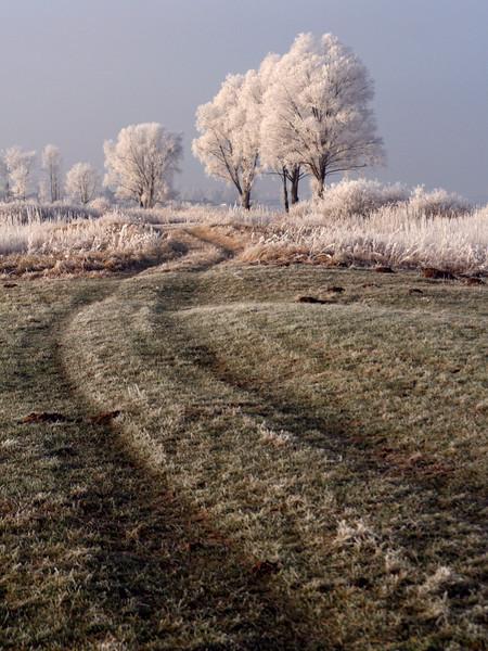 """""""Frosty Path"""" (13.5""""x18"""" #8661) $97"""