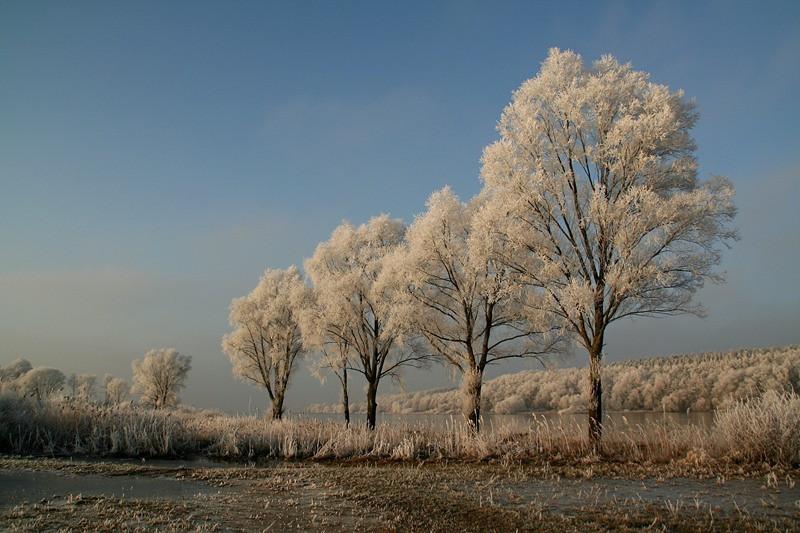 """Winter Trees"" (#8682)"