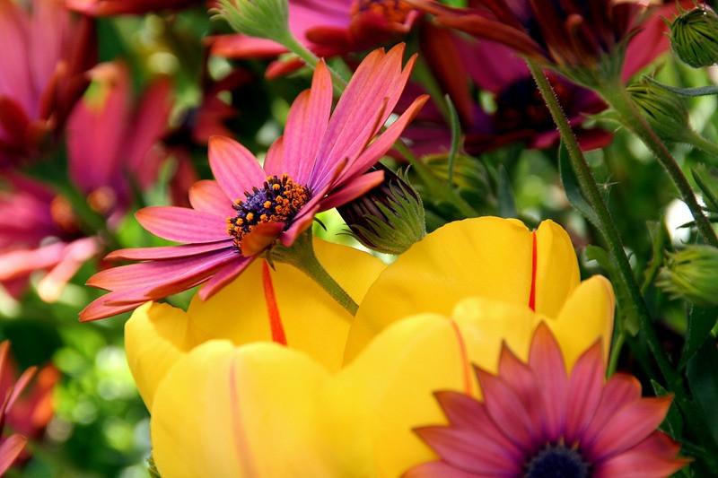"""Floral Symphony"" (13""x20"" #9572) $104"