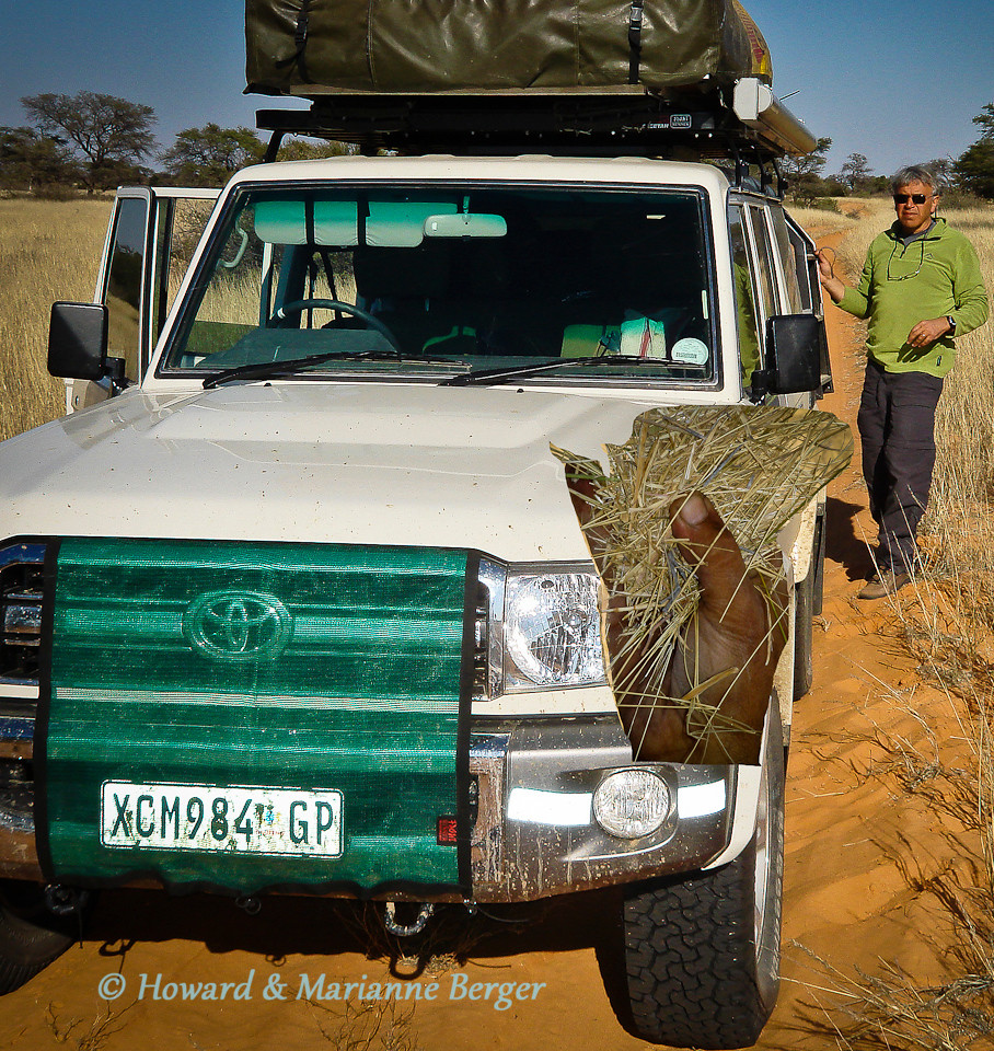 """<h2>Fire prevention</h2>There are many burnt out 4WD's spread out thru the veld of Africa. The trigger of the fire can be a  spark from a short in the complicated electrical systems e.g seat heating many modern 4WDs have. This is one reason the """"basic"""" LC76SW (shown)  is popular with 4WD enthusiasts . Fire can also be due to overheating of the engine because of limited air flow through a radiator that is clogged by  grass seeds from high grass on unused paths. This risk of course increases as kindle from dry grass stems and leaves accumulates under the car, especially around a hot exhaust pipe.  Regular stops, depending on the conditions e.g every 5 kms can be necessary and a long piece of wire is essential equipment, needed to reach difficult places (see inset). Always be be on the alert for smoke and the smell of smouldering grass. Remove the radiator net when not needed as it can itself cause overheating at higher speeds by blocking air flow. Also check the radiator net is low enough on your grill or bull bar. We have a fire extinguisher safely held between the front seats. Always check its pressure gauge before your trip."""