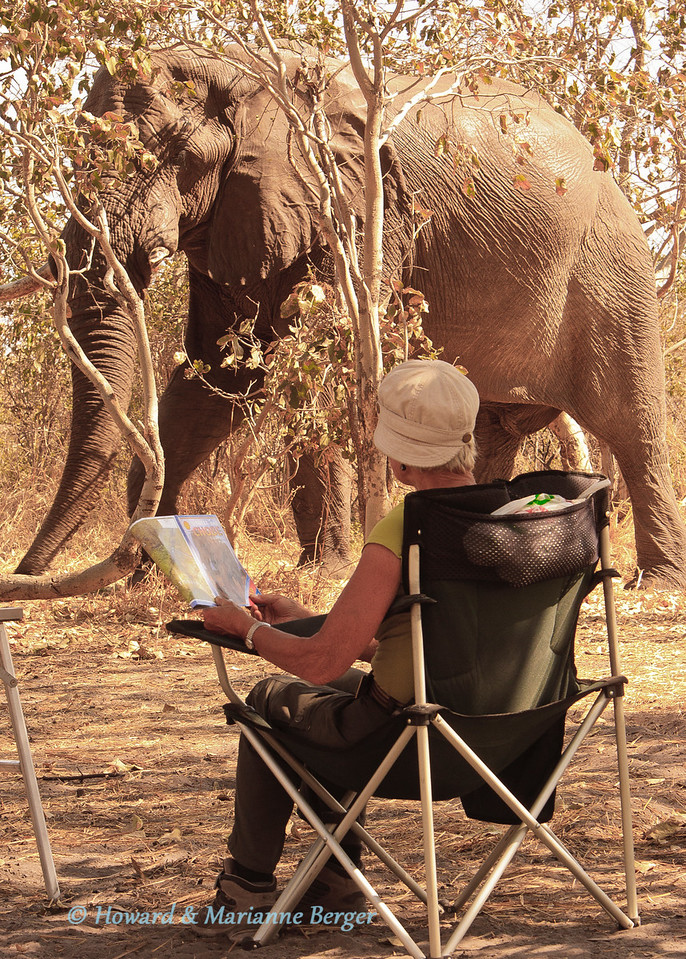 Our names are Howard and Marianne, and we are very enthusiastic amateur wild life photographers. It all started when we retired from our jobs in the medical profession 6 years ago. Since then we have spent 4-6 months each year travelling around Africa in our Land Cruiser 4x4 fitted with a roof top tent and other essential equipment. Most of the time is spent camping in game parks. Each year we take a different route, and have visited parks such as the Kruger and Kgalagadi Transfrontier Park in South Africa, Etosha and Caprivi parks in Namibia, Chobe, Savuti,and Moremi in Botswana, Hwange in Zimbabwe, South Luangwa in Zambia, and Ruaha, Tarangire, and Serengeti in Tanzania.<br />  <br /> We spend many many hours sitting in the car. From first light until dark we search for memorable wild life photographs, Thousands of photographs are taken; most are culled and only a small number survive the selection process. We hope that these photographs shown in AfricaRAW will convey the intimate and wild moments that we have had the privilege to experience and enjoy.