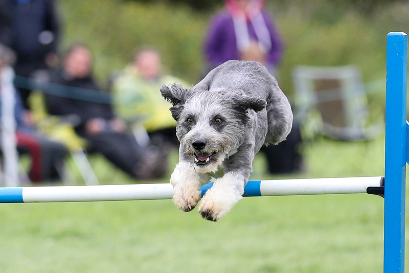International Agility Festival 2019
