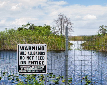 You see many signs in the Everglades warning you not to feed the alligators. Doesn't it seem like common sense alone should be enough to keep people from doing that? Yikes. Admire them, but don't feed them!