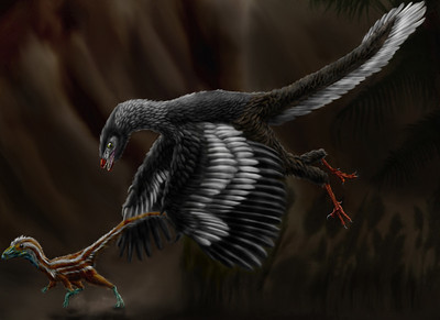 Based on fossils, scientists are able to determine what archaeopteryx would have looked like. They were about the size of a crow and probably were mostly black. Scientists have not been able to determine if they were capable of flapping flight, or whether they were just gliders. (Drawing by Durbed, placed in Wikimedia.)