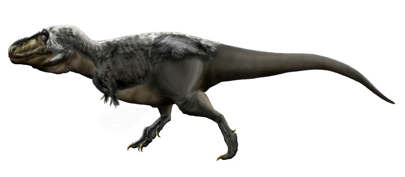 """Tyrannosaurus rex, the """"tyrant lizard king."""" (Drawing by Durbed, placed in Wikimedia.)"""