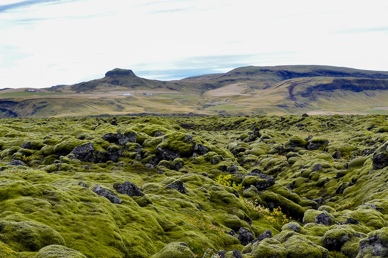 Skaftáreldahraun lava field, covered in colorful moss. The lava was deposited here during the devastating Laki eruption.