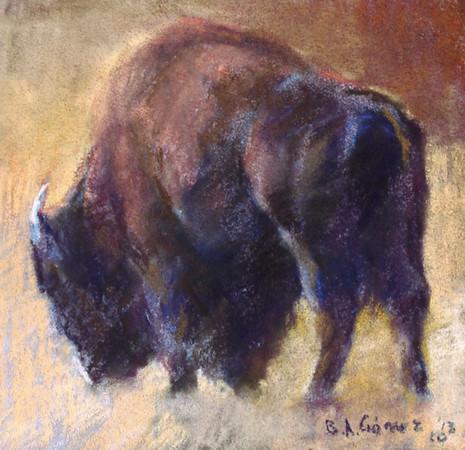 Janet's Bison Study