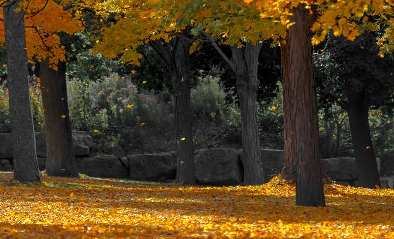 Falling leaves...