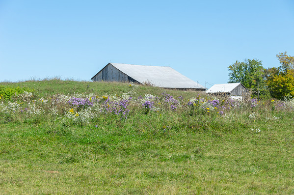 wildflower farm