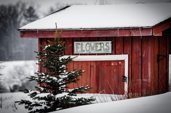frozen flower store