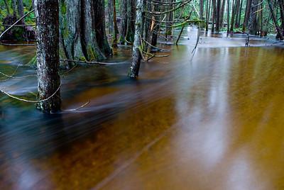 Flooded Blackwater Creek, near Powell River, BC