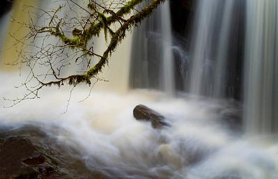 Appleton Creek, Powell River, BC