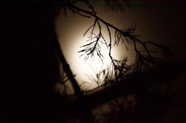 tender moonlight...