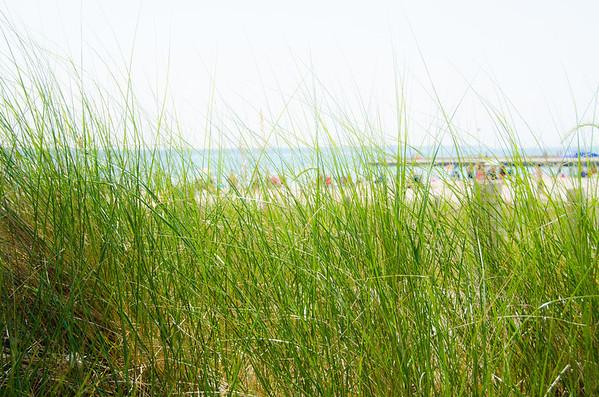 Beach grass