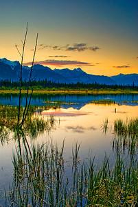 Snaring, Jasper National Park, AB