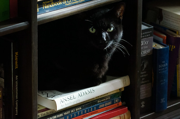 Missy in the bookcase...black cat and Ansel Adams