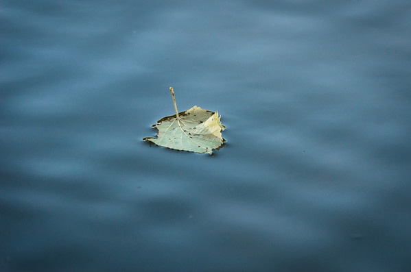 floating leaf...