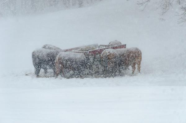snowy huddle