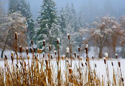 Gardom Lake, Enderby, BC