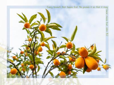 P1023891-Kumquats
