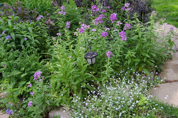 phlox and forget-me-nots