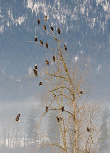 Eagle Tree in Grindrod