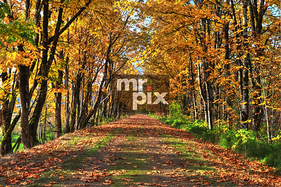 Snoqualmie Valley Trail in the Fall