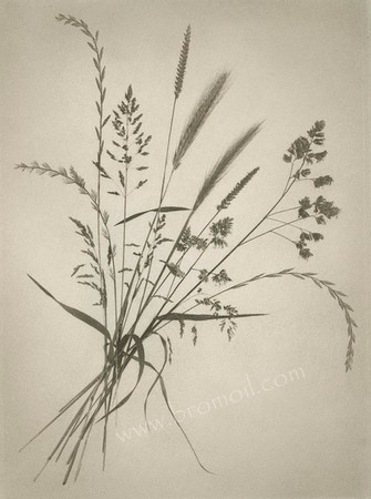 Grasses Bromoil Print