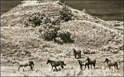Mustangs, ND. 2012