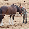 LTC deFriesse petting Patton as he prepares to bring him into the barn to brush him for the last time
