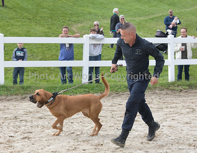 Horse Guard K-9 Challenge and Car Show 2018