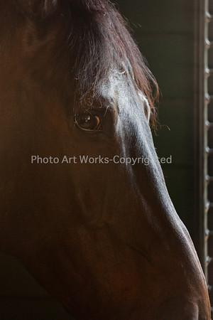 Photo Art Works-118