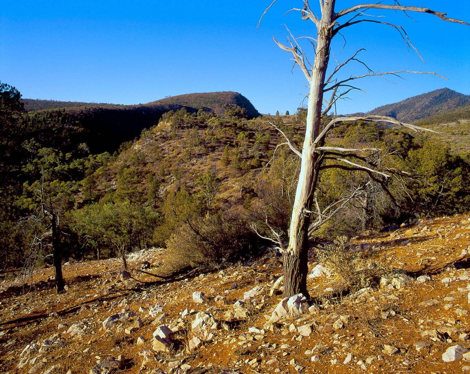 Mt Remarkable National Park, South Australia