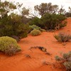 Woomera/Roxby Downs - South Australia
