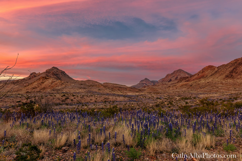 Big Bend Sunset and Bluebonnets.