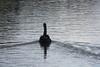 Black Swan at Stoke Gabriel - IMG_0586