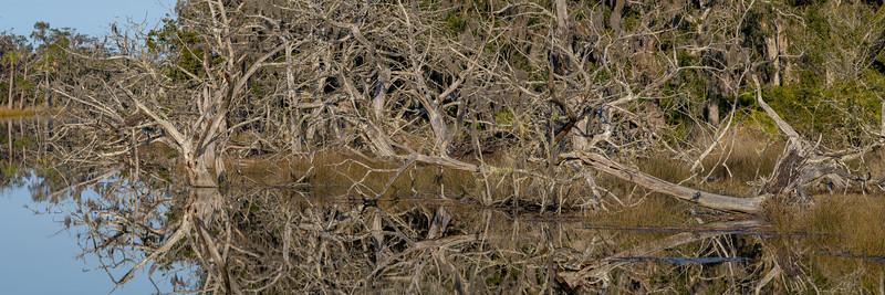 Plum Orchard Creek