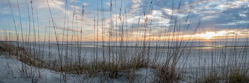Winter Sea Oats