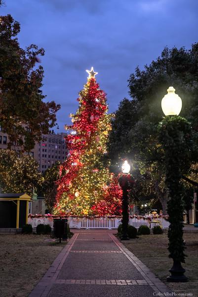 Travis Park Christmas Tree 2018