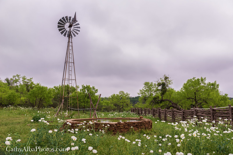 Windmill and  Prickly Poppy