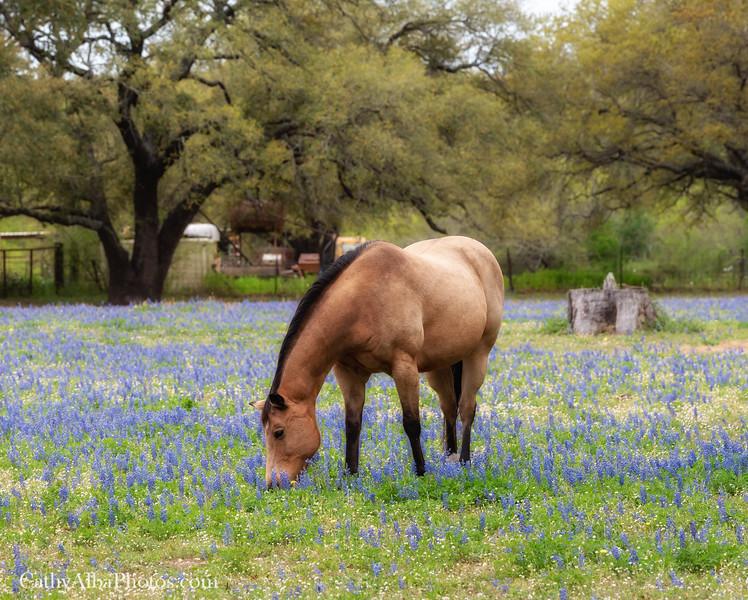 The Texas Life