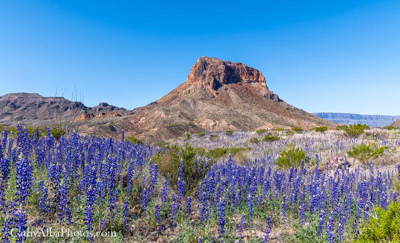 Bluebonnets below Cerro Castellan