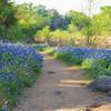 A walk among wildflowers
